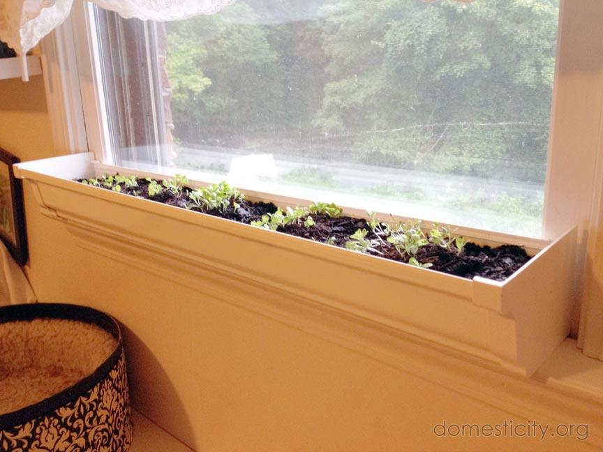 windowsill garden domesticity simple chic domestic life. Black Bedroom Furniture Sets. Home Design Ideas